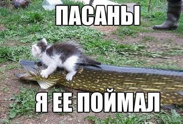 — Картинки-приколы — Приколы, видео ...: prikol.poltava.info/pictures/rybalka-7198